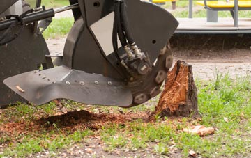 professional Romford stump grinding services