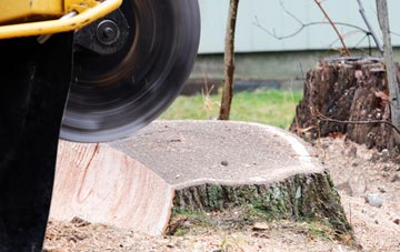 tree stump grinding Romford