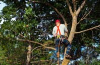 Romford tree crown reduction services