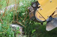 free Romford tree stump grinding quotes